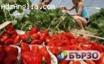 Бригади ягоди- старт Юни