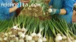 Бране и пактетиране на зелен лук . Заминаване Веднага