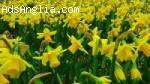 Бране на Цветя и ПакХаус