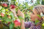 Англия-ябълки,круши