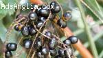 Saw Palmetto Herbal remedy for healthy life   Roncuvita